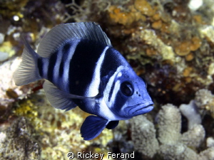Taken while diving in Roatan July 2012 by Rickey Ferand 